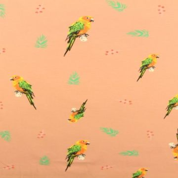Parrots on Old Pink